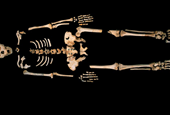 'Pit of Bones' Yields Oldest Known Human DNA
