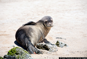 Who's Killing Hawaii's Monk Seals?
